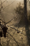 The Web. A giant spider web in Tuscany Italy Royalty Free Stock Images