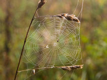 Web on the grass close up Royalty Free Stock Photography