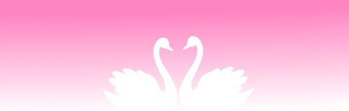 Web Header swan couple. Cute swan couple in love and looking each other on pink / purple romantic background Website header / banner Royalty Free Stock Images