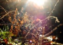 Web in het hout Stock Afbeeldingen