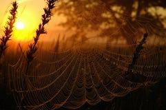 Web in het licht van de het toenemen zon Royalty-vrije Stock Foto