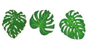 web Hojas tropicales Ejemplo exhausto de las hojas de la mano ilustración del vector