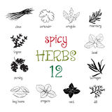 Web icon set of different spicy herbs Royalty Free Stock Image