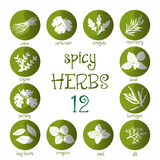 Web icon set of different spicy herbs Stock Image