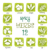 Web icon set of different spicy herbs. On grunge background Royalty Free Stock Photo