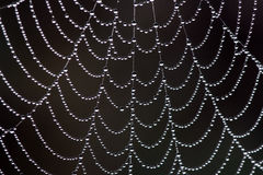 Free Web In Dew Stock Photo - 16954700