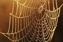 Free Web In Dew Stock Photo - 16954790