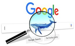 Web Internet Search, Blue Whale, save the world vector illustration