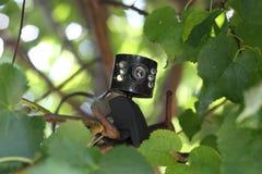 Web-Kamera auf der Niederlassung des Baums Lizenzfreie Stockfotos