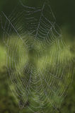 Web lacé par rosée Photographie stock libre de droits