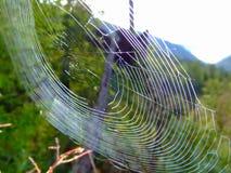 A Web larga para travar a grande floresta voa Imagens de Stock