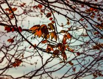 A web of leaves and branches royalty free stock photography