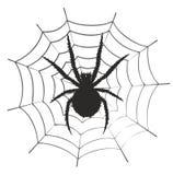 Web met een spin Stock Afbeelding