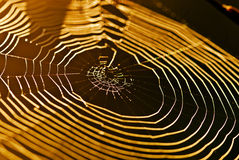 Web mit Tautropfen Stockbild