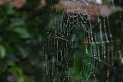 Web in the morning dew Royalty Free Stock Photo
