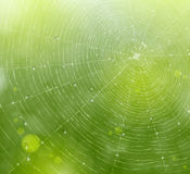 Web of natural background Royalty Free Stock Image