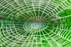 Web in nature Royalty Free Stock Image