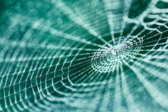 Web in nature Royalty Free Stock Photos
