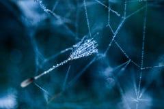 Web nell'erba bagnata Fotografie Stock Libere da Diritti