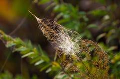 Web, netto spinneweb, spiderweb, weefsel, spinneweb royalty-vrije stock afbeelding