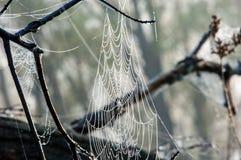 Web, netto spinneweb, spiderweb, weefsel, spinneweb stock foto's