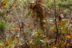 Web, netto spinneweb, spiderweb, weefsel, spinneweb stock fotografie