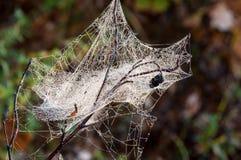 Web, netto spinneweb, spiderweb, weefsel, spinneweb royalty-vrije stock afbeeldingen