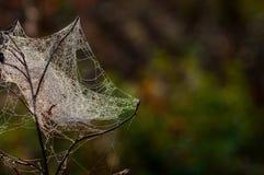 Web, netto spinneweb, spiderweb, weefsel, spinneweb stock foto