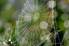 Web network trap. Web in a wood, morning and drops of water on it Royalty Free Stock Images