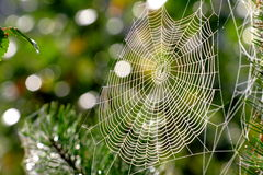 Web, network, trap,. Web in a wood, morning and drops of water on it Stock Photos