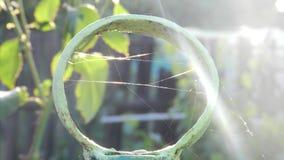 Web no anel do ferro no nascer do sol imagem de stock