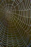 Web no orvalho Fotografia de Stock