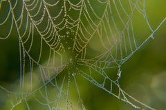 Web no orvalho Imagem de Stock