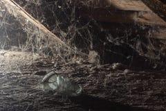Web no sótão da casa, um momento original, uma aranha Imagem de Stock Royalty Free