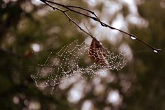 Web nos ramos no orvalho de uma floresta enevoada foto de stock royalty free