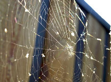 Web. The old spider web glitters in the sun Royalty Free Stock Photos