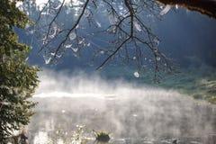 Web op de takken van uitgerekte bomen royalty-vrije stock afbeeldingen