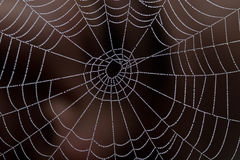 Web of pearls Royalty Free Stock Images