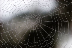 Web of pearls too Stock Photography