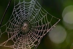 Web, réseau, trappe, Photos stock