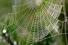 Web, réseau, trappe, Photo stock
