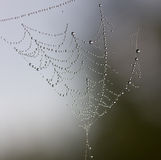 Web after a rain Royalty Free Stock Images