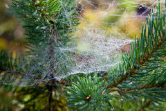 Web after a rain Royalty Free Stock Photography