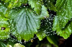 Web with rain drops, soft focus royalty free stock photography