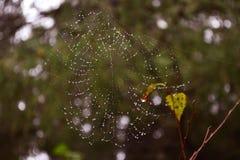 Web redonda nos ramos no orvalho de uma floresta enevoada fotos de stock royalty free