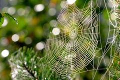 Web, rete, presa, Fotografie Stock