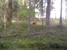 The web Royalty Free Stock Photos