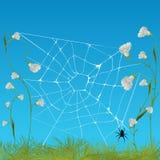 Web spider Imágenes de archivo libres de regalías