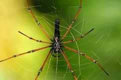 Web of Spider Royalty Free Stock Photo