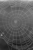 Web spider Fotografia Stock
